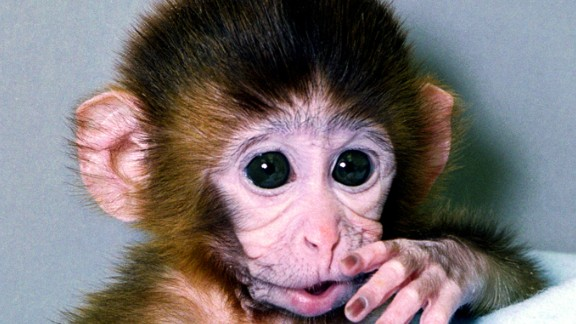 ANDi is the world's first genetically modified primate.