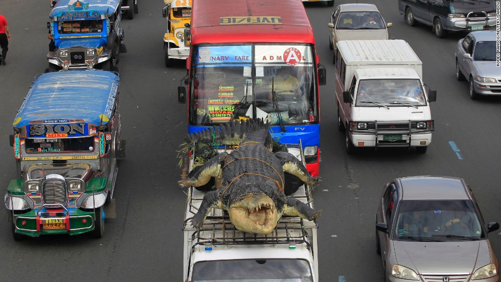 A 21-foot crocodile robot is strapped on top of a van as it is transported to the Davao Crocodile Park in Pasay, Philippines, on Saturday, July 5.