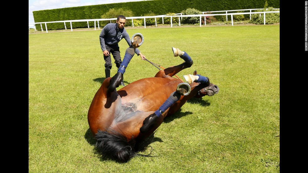 Toronado rolls on the ground after a workout Monday, July 14, at Goodwood Racecourse in Chichester, England.