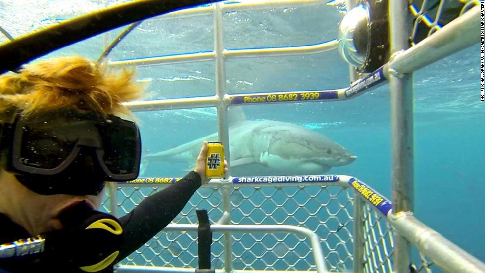 "A shark swims by a cage protecting Thomas, a crew member with Calypso Star Charters in Port Lincoln, Australia. The selfie was uploaded to the company's <a href=""https://www.facebook.com/photo.php?fbid=10152365663049737&set=a.10151872305609737.1073741837.20676524736&type=1&theater"" target=""_blank"">Facebook account</a> on Saturday, July 12."