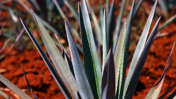 A more exotic sweetener, agave nectar is created from the agave plant that is native to southern and western United States and parts of South America. It contains fewer carbs than most other sweeteners and contains vitamin C. Calories per tablespoon: 63.