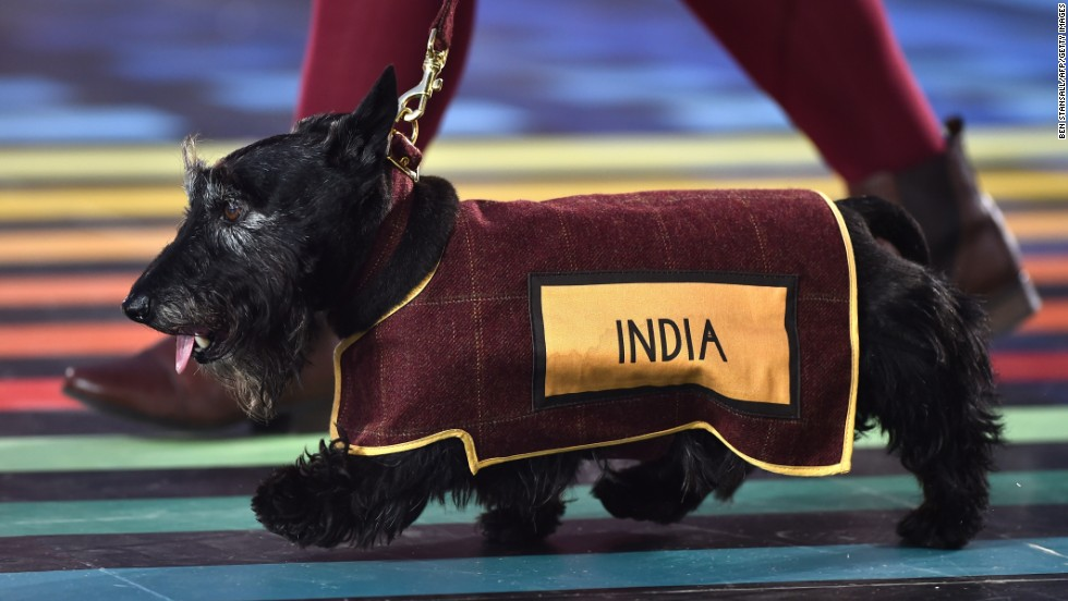 Scottish terrier dogs accompanied the teams as they walked around the arena.