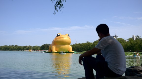A man ponders the golden toad.