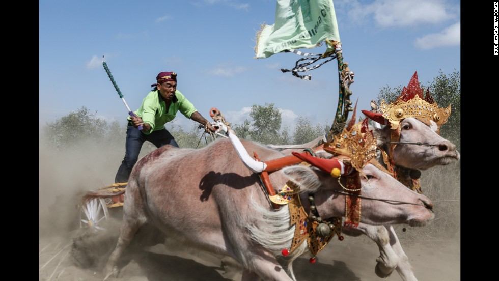 A contestant competes in Mekepung, a traditional water buffalo race, near Negara, Indonesia, on Sunday, August 3.