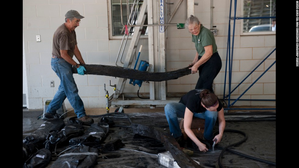From left, Mark Edmondson, Betty Seifert and Sara Rivers-Cofield help preserve the life of the timbers in August 2010. To determine the ship hull's origins, researchers analyzed tree rings from wood samples and referenced them against several other historical tree chronologies.