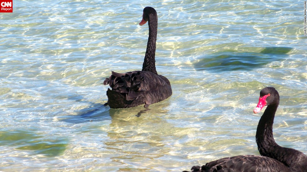 "Daniel Beaujouan likes to visit Western Australia's <a href=""http://ireport.cnn.com/docs/DOC-1151357"">Swan River</a> to relax after a long day at work in Fremantle. Visitors can spot the river's trademark black swans or even scuba dive at its deepest point."
