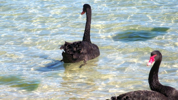 Daniel Beaujouan likes to visit Western Australia's Swan River to relax after a long day at work in Fremantle. Visitors can spot the river's trademark black swans or even scuba dive at its deepest point.