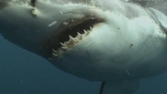 shark week lisas desk_00003714.jpg