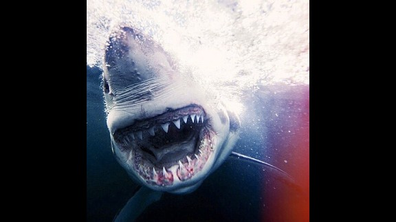 Cage-free shark photographer Michael Muller is taking over Discovery Channel's Instagram for Shark Week 2014. He hopes to use the opportunity to raise awareness about the declining populations of sharks.