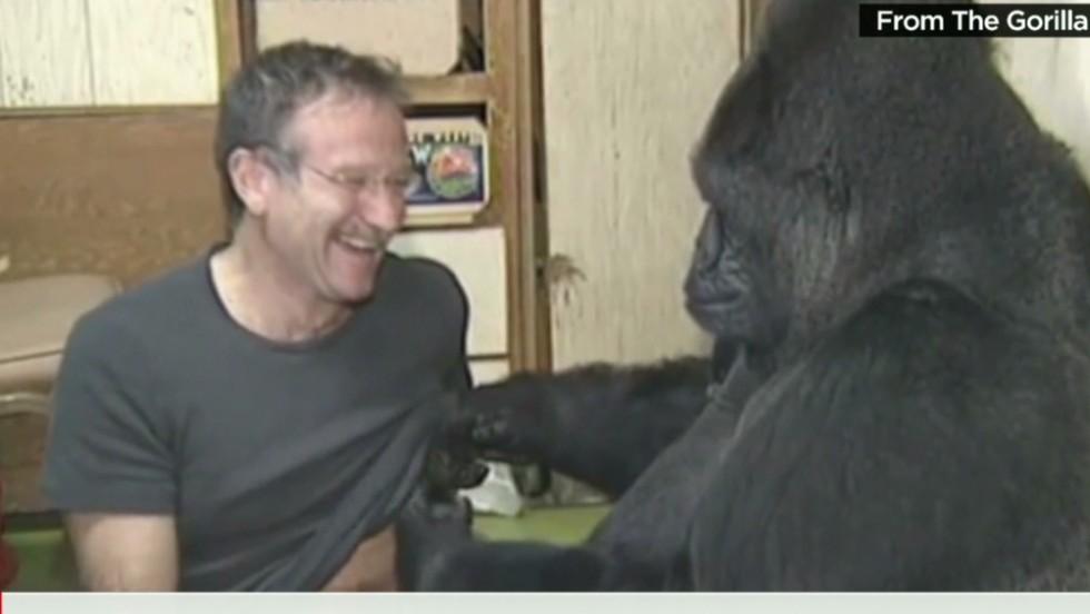 Koko The Gorilla Who Mastered Sign Language Has Died Cnn