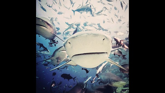 """""""I've been surrounded by 150 to 200 sharks, not once ever been been close to being bitten."""""""