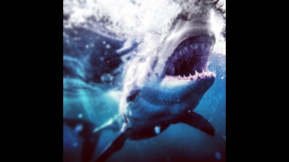 """Muller says of sharks: """"100 million a year are killed people ... We gotta do what we can to put a stop to this or our ocean's fragile eco system is going to end up with just jellyfish."""""""