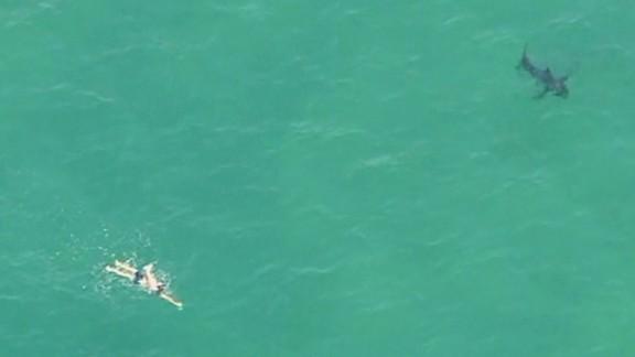 dnt white shark manhattan beach not aggressive_00001621.jpg