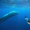 Exceptional Experiences World Sri Lanka Blue Whale