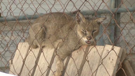 pkg pleitgen gaza zoo damage_00021718.jpg