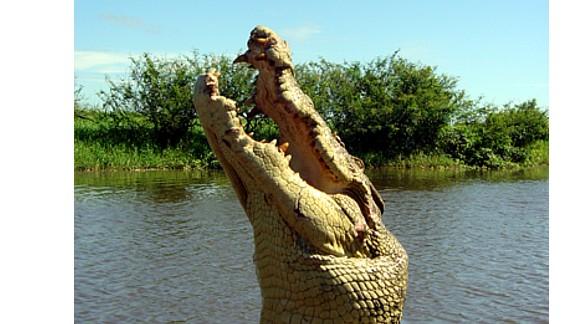 Rare pale-headed crocodile kills man in Australia - CNN