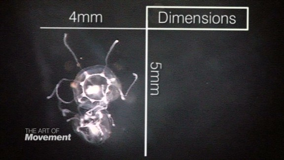 spc art of movement immortal jellyfish_00013702.jpg