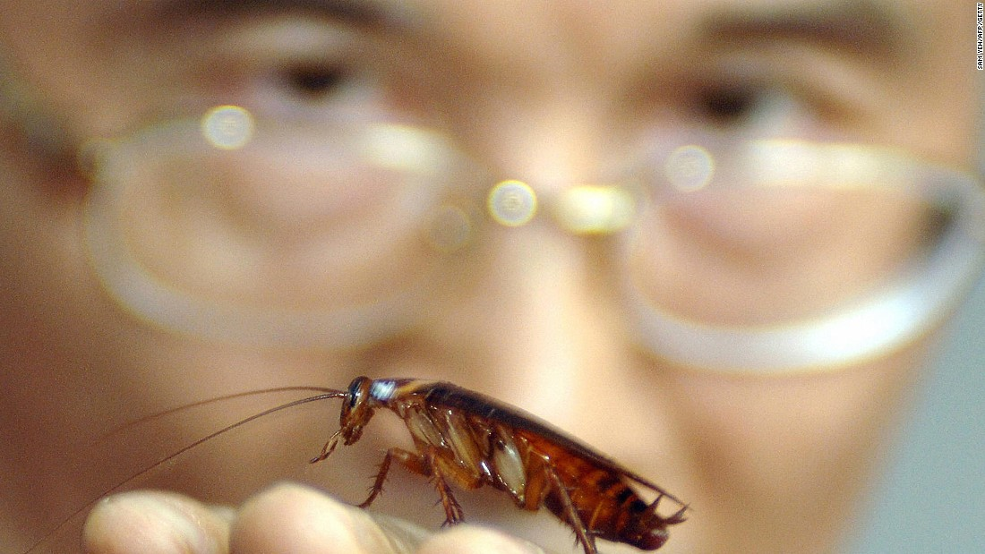 Yum! Insect food as a luxury brand might lure Westerners