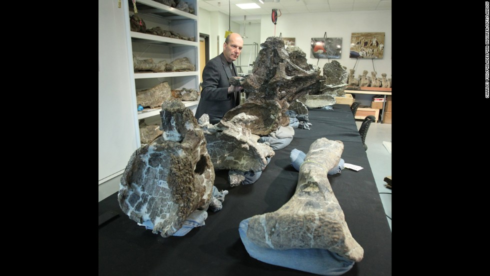 Scientists think they can learn a lot from this find largely because of how well-preserved the specimen is. Not including the head, the excavating teams were able to discover 70% of the bones, far more than most dinosaur finds.