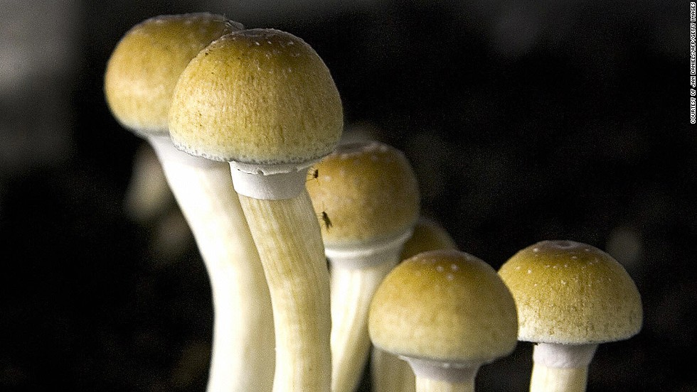 Psilocybin -- the active ingredient in magic mushrooms -- could be used during controlled therapy to treat depression. The psychoactive is thought to enable people to confront and make sense of the world.