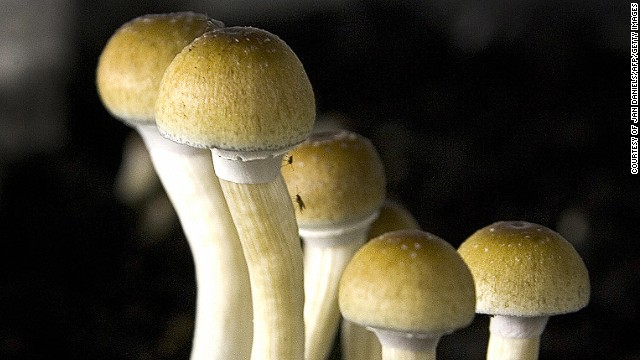 How 'magic mushroom' chemical could free the mind of depression, addictions