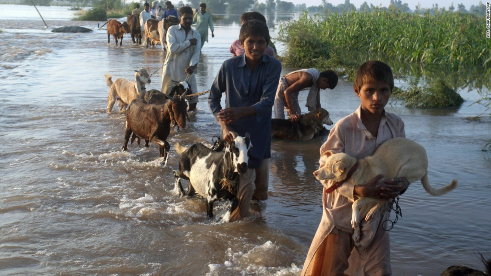 Residents take their livestock to a safer place after heavy rains in Jafar Kot, Pakistan, on Sunday, September 7.