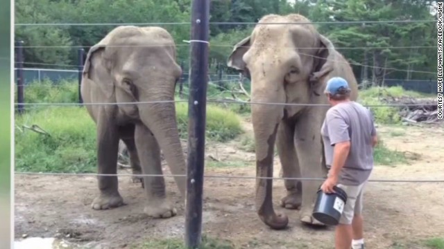 Sanctuary owner killed by elephant
