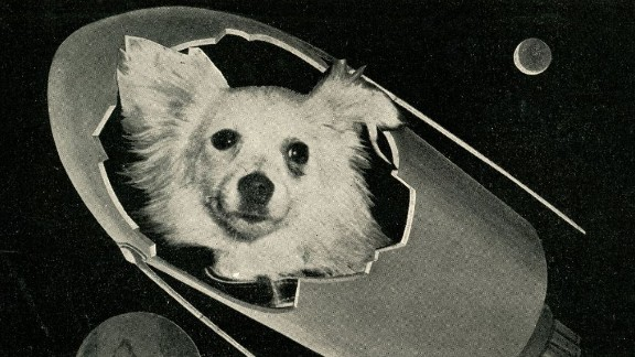 """The success of Belka and Strelka inspired a range of other flights. This postcard produced in Italy around 1960 shows an image of Kozyavka (""""beauty"""") the space dog. Kozyavka and another dog called Damka were set to take flight in 1960, but the upper rocket stage failed and the flight was abandoned. The dogs were recovered from a suborbital flight."""