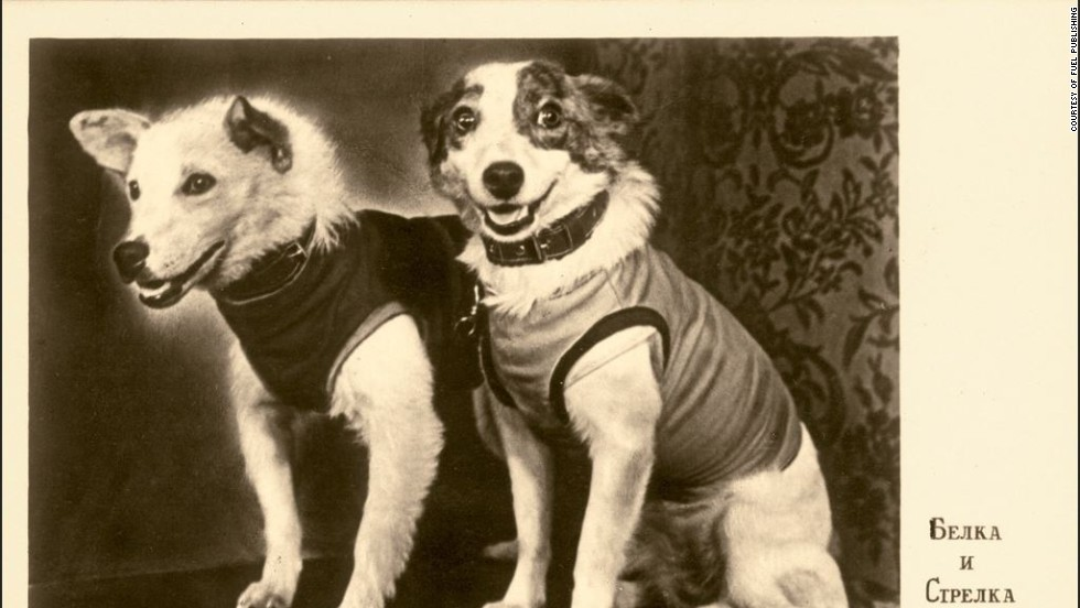 Following the sad death of Laika in 1957, the USSR set their sites on a dog duo to boost national moral. Belka and Strelka were the next heroes, set to take flight in 1960. This photograph shows the dogs at their first press conference.