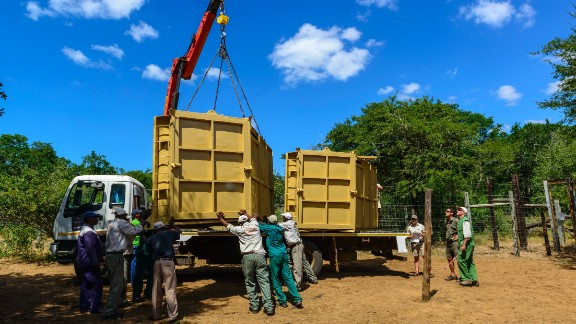 Rhino candidates are sedated and their blood samples studied to make sure they're strong enough to make the trip. The rhinos then recover during a six-week quarantine before they're moved by plane to a secret location in Botswana.