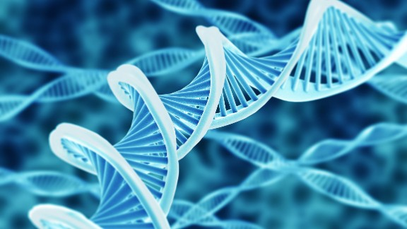 A single strand of human DNA, fully unraveled, would run from head to toe.
