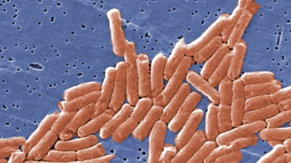 Salmonella enterica bacteria become more virulent and therefore better at causing disease in the micrograity environment of space.