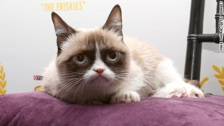 Grumpy Cat may be gone, but our obsession with internet cats will never die