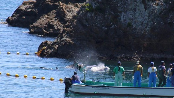 "According to Sea Shepherd, the dolphin hunters ""smiled and laughed"" as they continued to herd the pod."