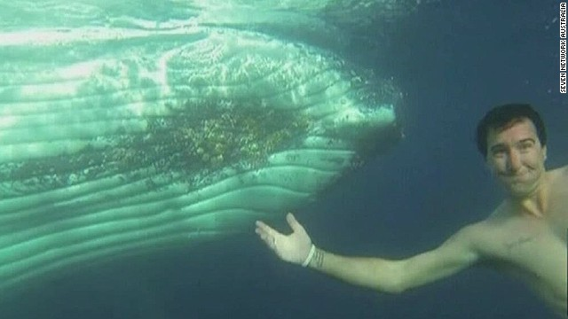 Up close with 80,000-lb. humpback whale