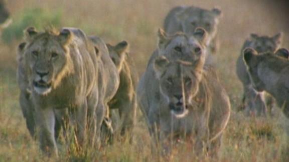 lok soares wildlife global decline_00003503.jpg