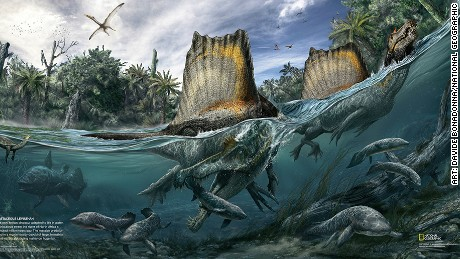 The only known dinosaur adapted to life in water, Spinosaurus swam the rivers of North Africa a hundred million years ago. The massive predator lived in a region mostly devoid of large, terrestrial plant-eaters, subsisting mainly on huge fish.
