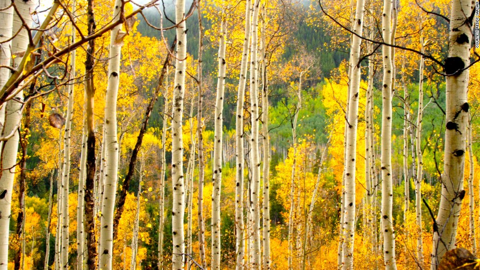"Every autumn, the hills of Aspen, Colorado, turn a beautiful gold. See more photos on <a href=""http://ireport.cnn.com/docs/DOC-1175002"">CNN iReport</a>."