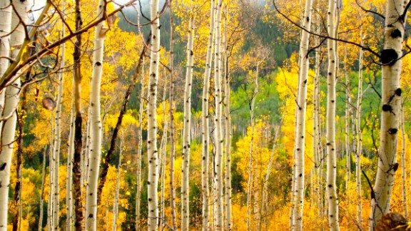 Every autumn, the hills of Aspen, Colorado, turn a beautiful gold. See more photos on CNN iReport.