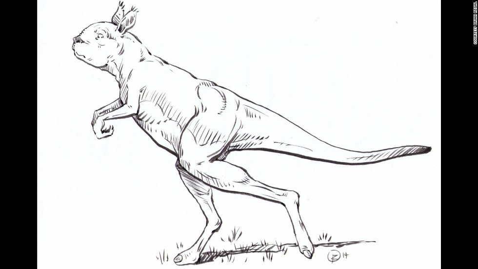 Study: Giant prehistoric kangaroos walked like humans - CNN