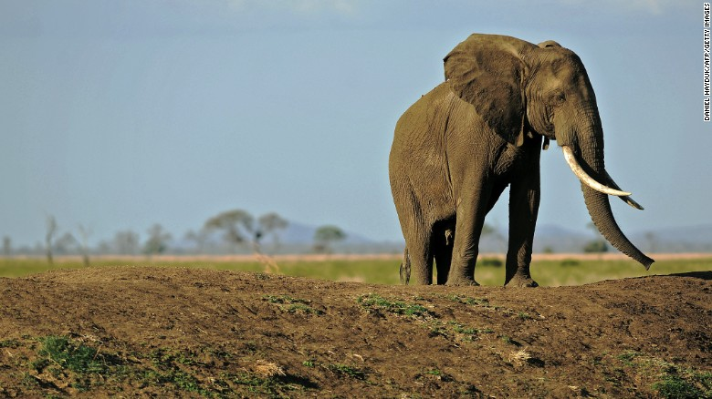 Tanzanian elephant population in 'catastrophic decline'