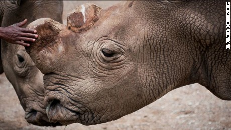 Suni was one of the last northern white rhinos in the world.