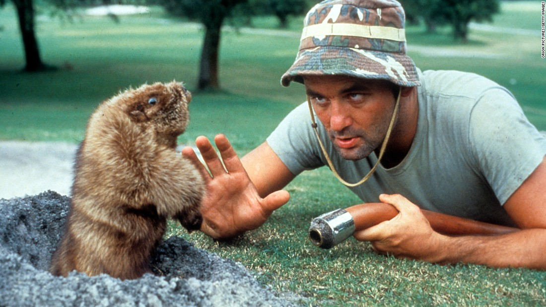 """In the immortal words of Jean Paul Sartre, 'Au revoir, gopher."" Bill Murray eye to eye with a groundhog in a scene from the film ""Caddyshack."""