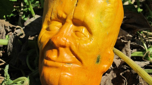 The pumpkinstein was the result of four years of trial and error.