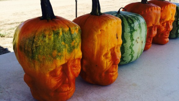 In addition to pumpkinsteins, Tony Dighera also creates uniquely shaped watermelons.