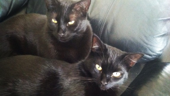 """Superstitions never gave me pause, so silly in my opinion,"" says Laura DiMestico of her two black cats, Bagheera and Vader. ""They are truly the most playful and snuggly, loving cats I have ever had."""