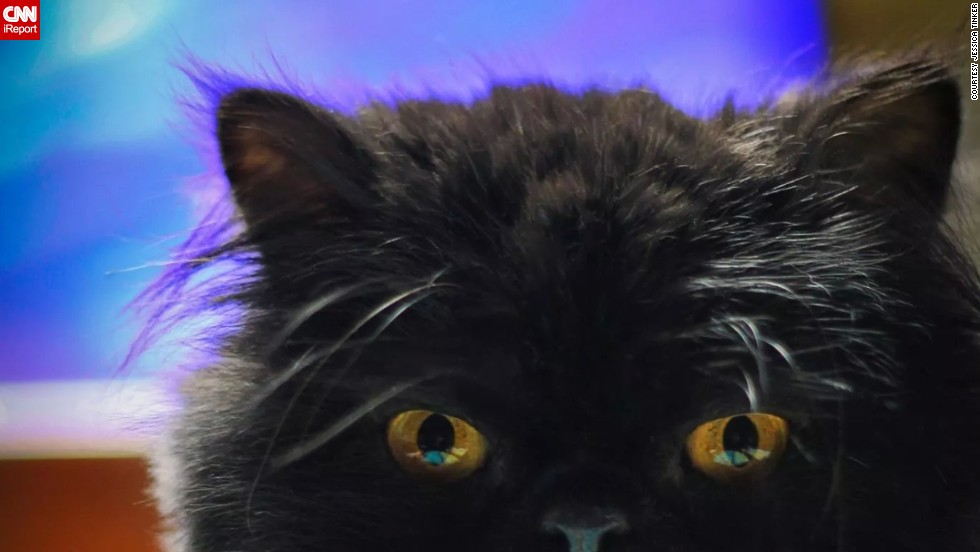 "An <a href=""http://www.telegraph.co.uk/lifestyle/pets/10998439/Misfortune-of-black-cats-rejected-in-age-of-selfie.html"" target=""_blank"">article</a> claiming that black cats get abandoned because they don't look good in photos went viral over the summer<br /><br />But not <a href=""http://ireport.cnn.com/docs/DOC-1181660"">Bandit</a>, whose favorite pastimes include ""eating, sleeping, and killing pipe cleaners,"" says owner Jessica Tinker. When it comes to photographing black kitties, ""the struggle is real,"" she says. ""I've found it works best to have a light source shining towards his face, to take a picture when his eyes are wide open, or if he's against a light-colored background."""