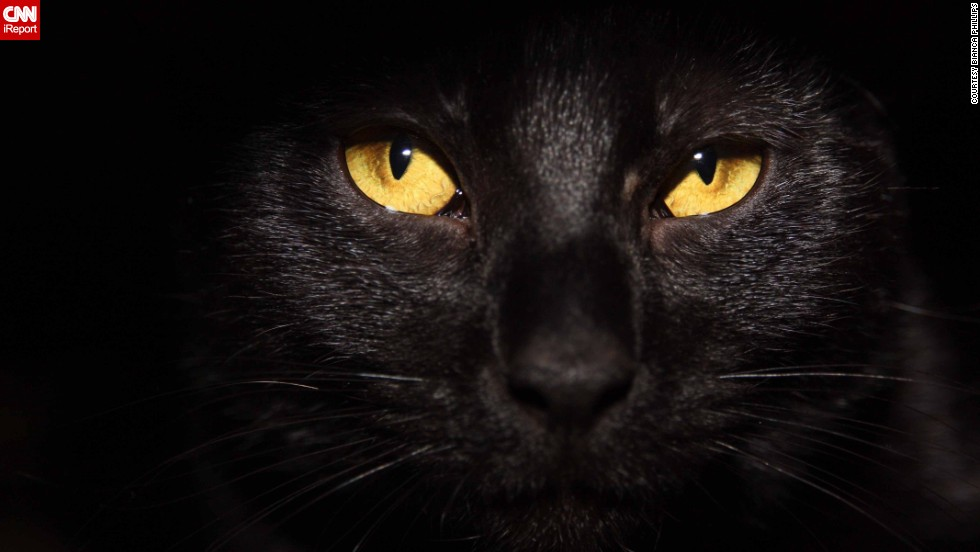 Attractive To Be A Black Cat On Halloween   CNN