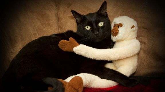 "Shauna Cornwell's black cat Mac ""loves cuddles, whether it be with our other cat Charlie, people or, in this picture, a stuffed monkey."""
