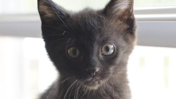 "Pepper came to live with Caroline Natale's family after Natale's 7-year-old daughter specifically requested a black cat.   ""Shoot them in as bright a setting as possible,"" Natale recommends, ""or you will just see a black blob and eyes."""